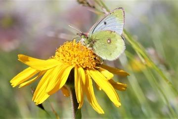 fleur-et-papillon